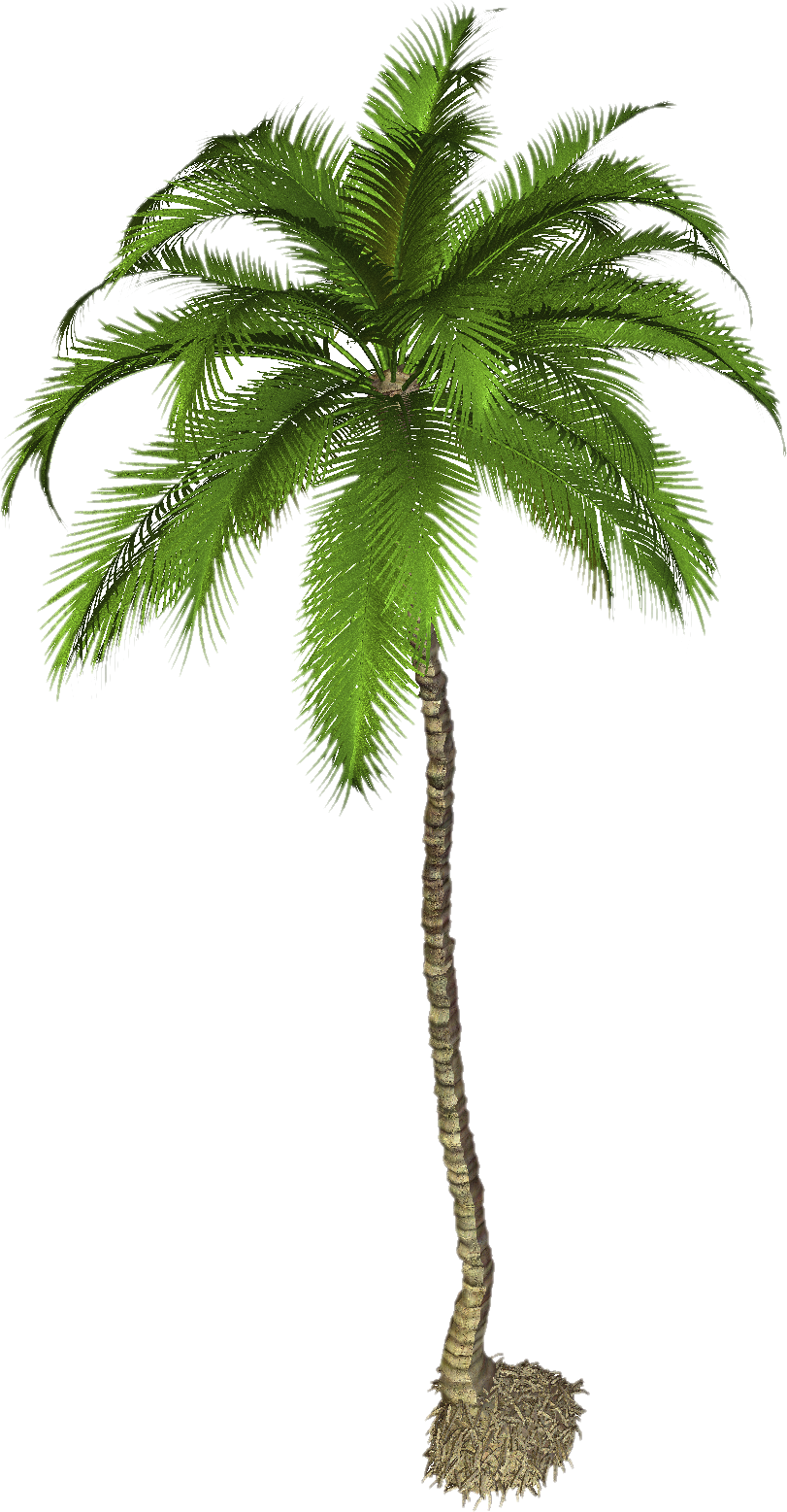 Pigmy palm png. Cp paurb india date