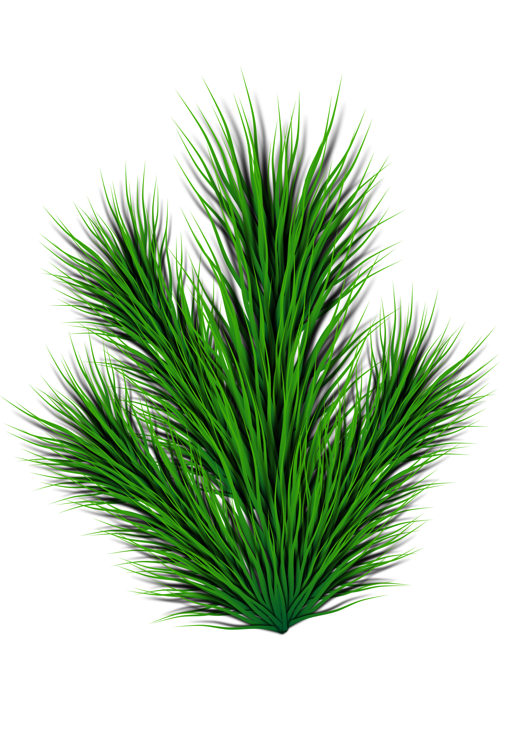 Pine leaf png. Branch icons free and