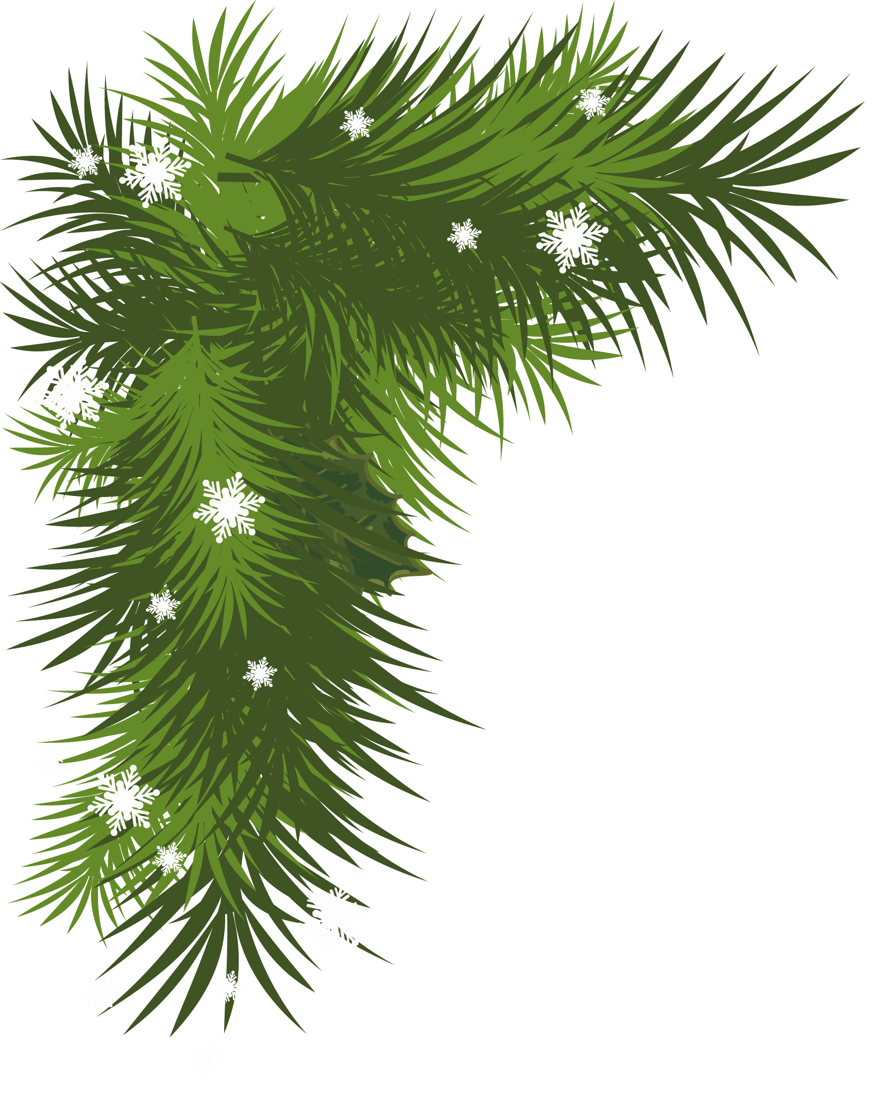 Pine bough png. Snowy branch picture gallery