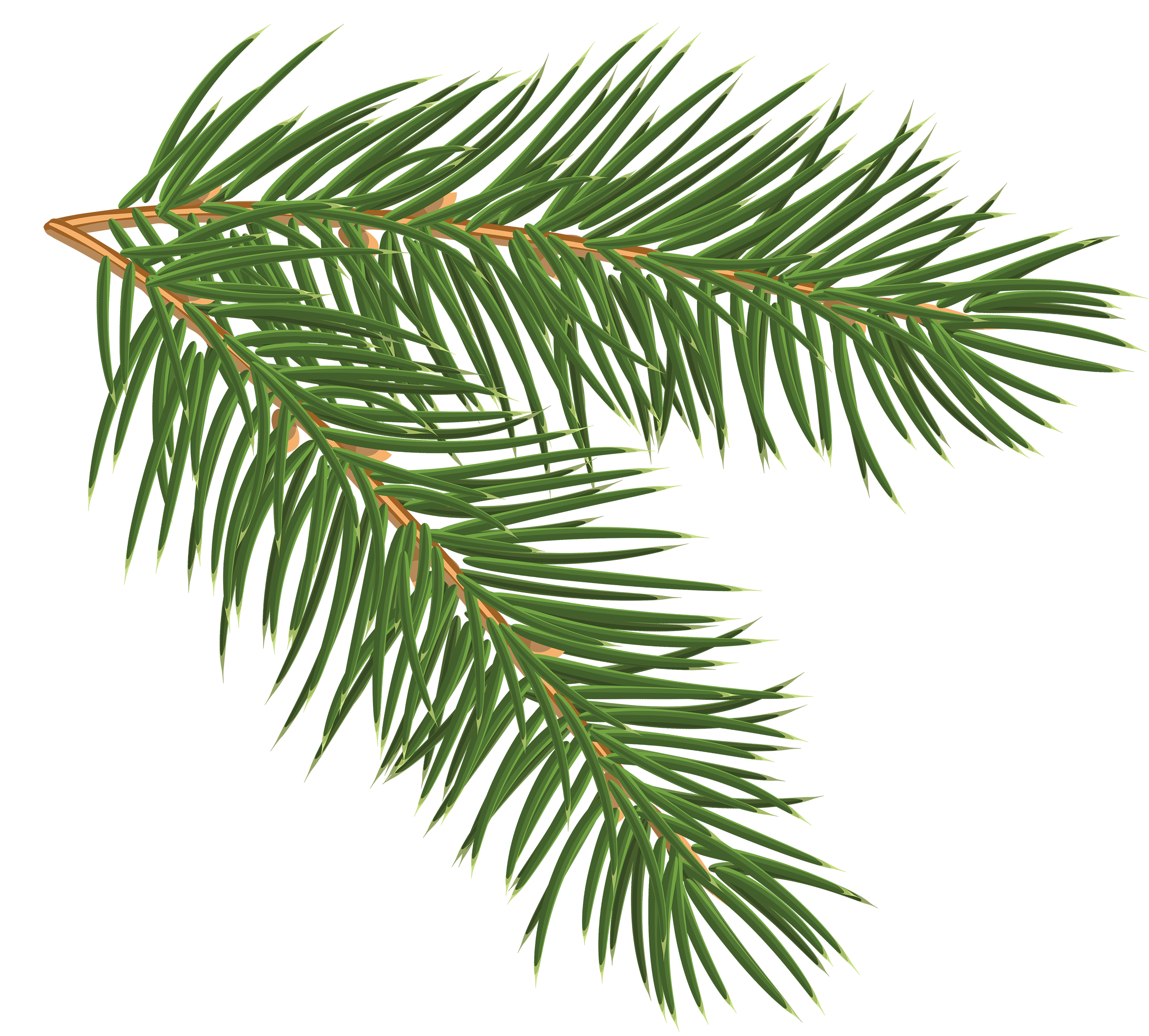 Pine branch png. Clip art image gallery