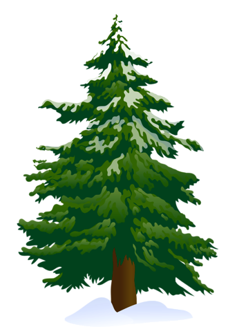 evergreens with pine cones png clipart