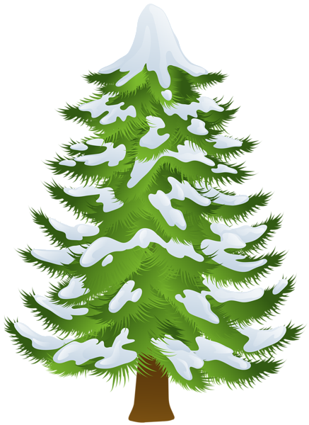 Pine clipart. Winter tree transparent png