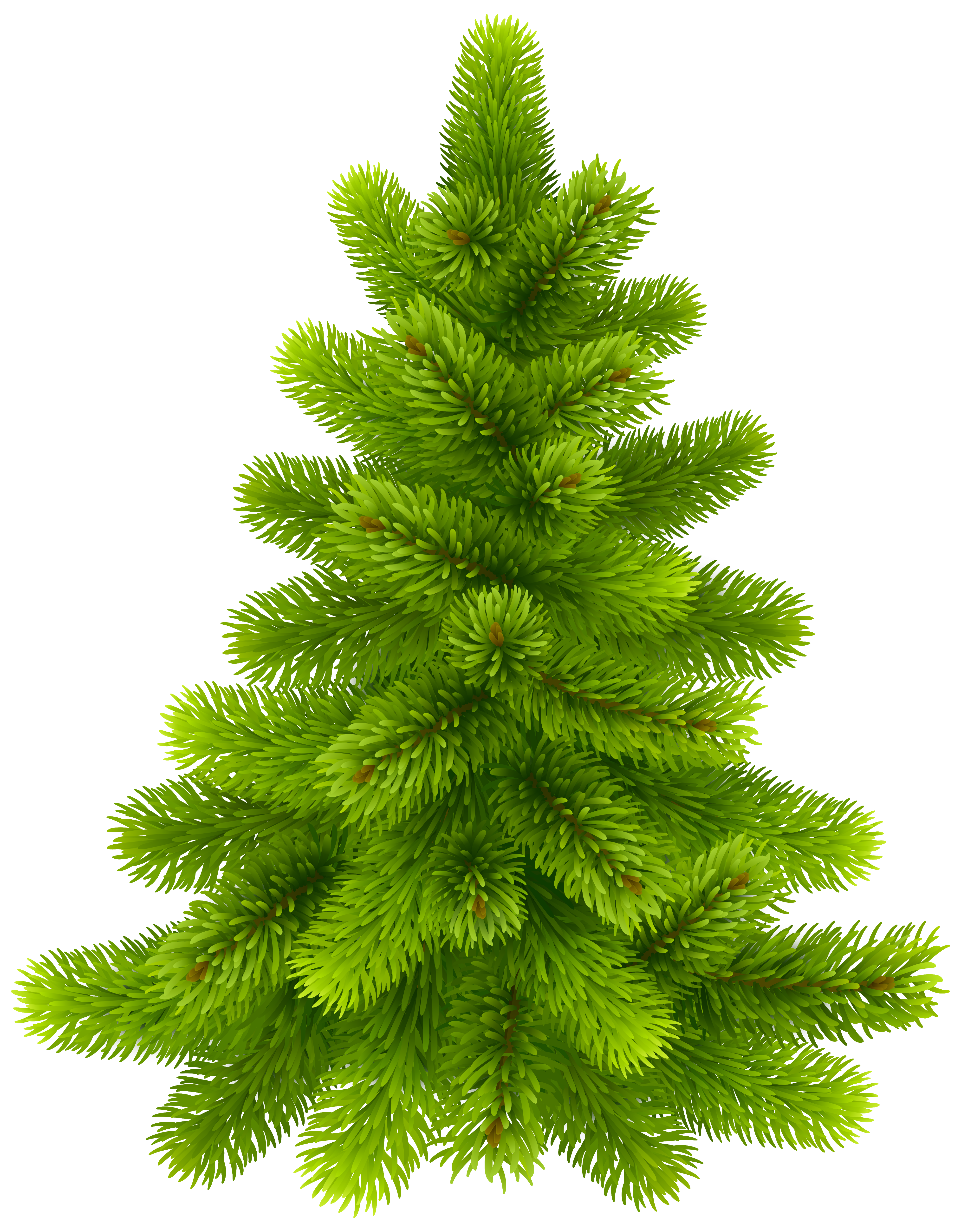 Pine clipart. Tree png clip art