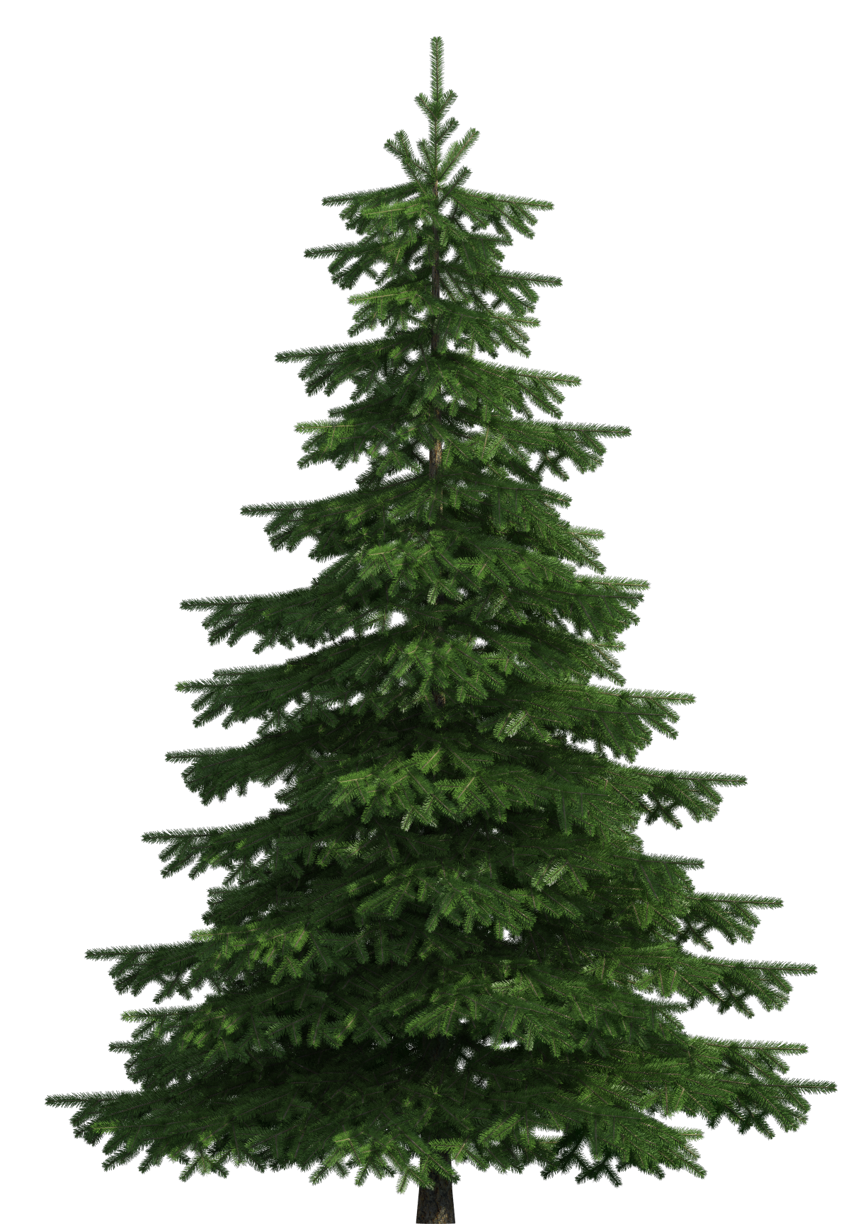Realistic tree clip art. Pine trees clipart png png royalty free