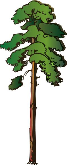 Pine clipart animated. Minnesota state tree norway