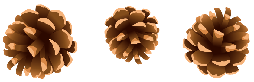 pinecone clipart pine leaves