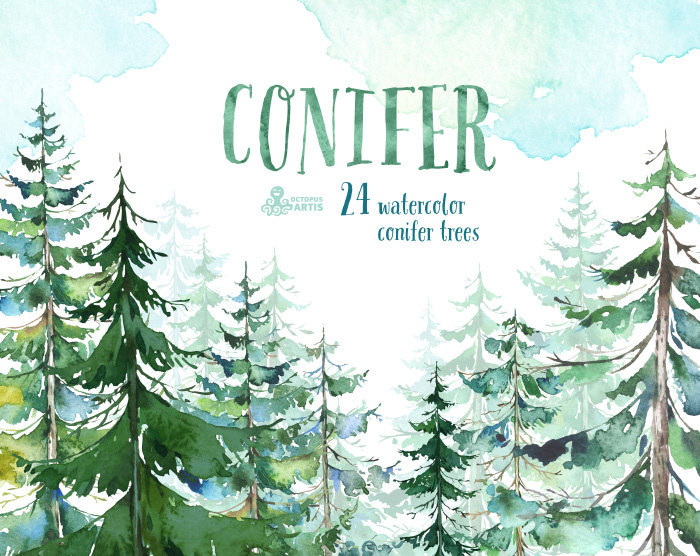 Pine clipart coniferous tree. Conifer trees watercolor spruce