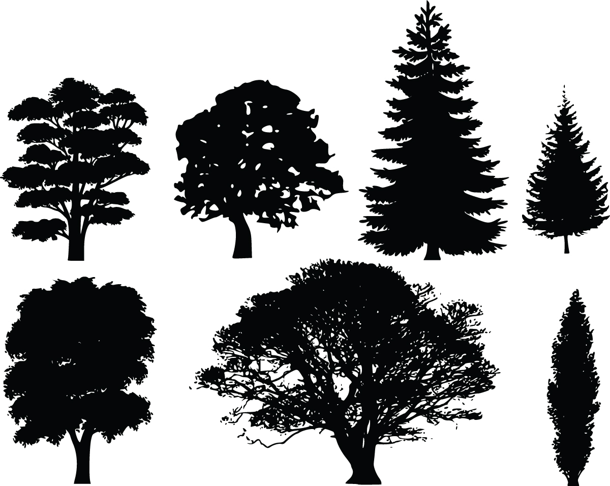 Pine clipart coniferous tree. Deciduous clipground black and