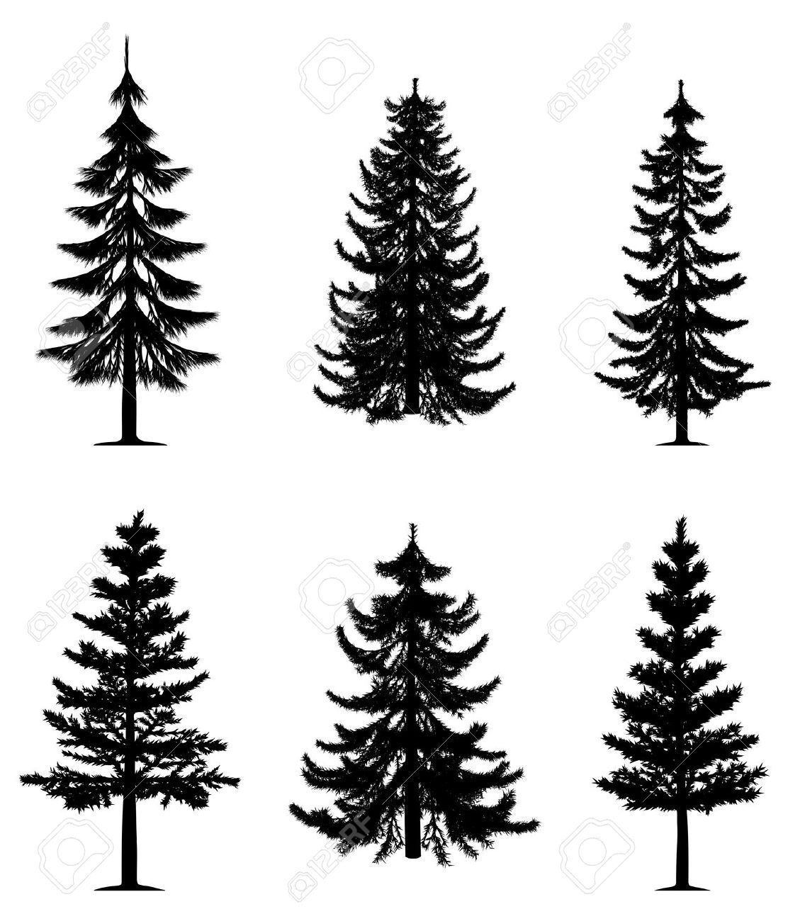 Pine clipart fine tree. Trees collection royalty free
