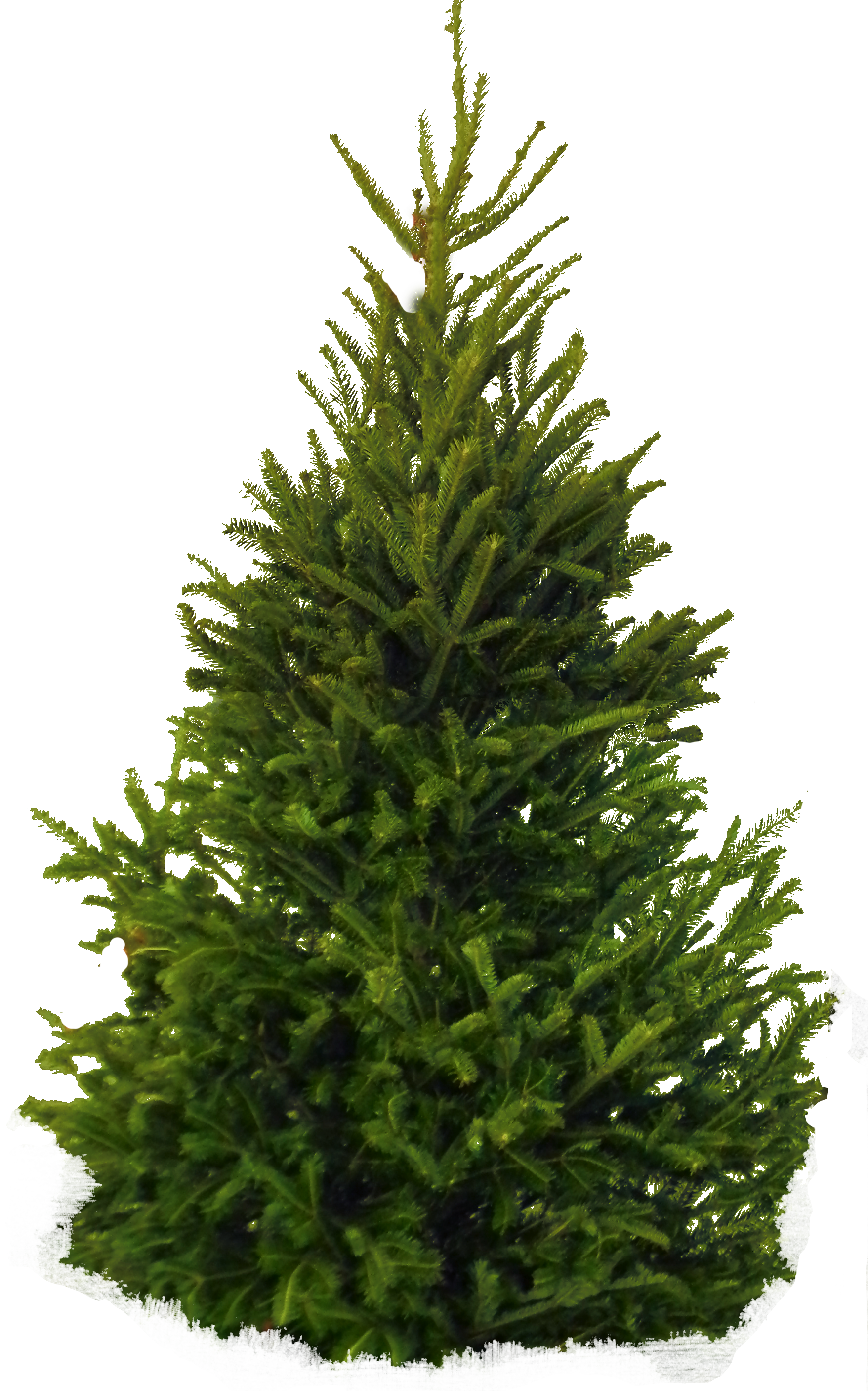 Pine clipart fir tree. Icon transparentpng