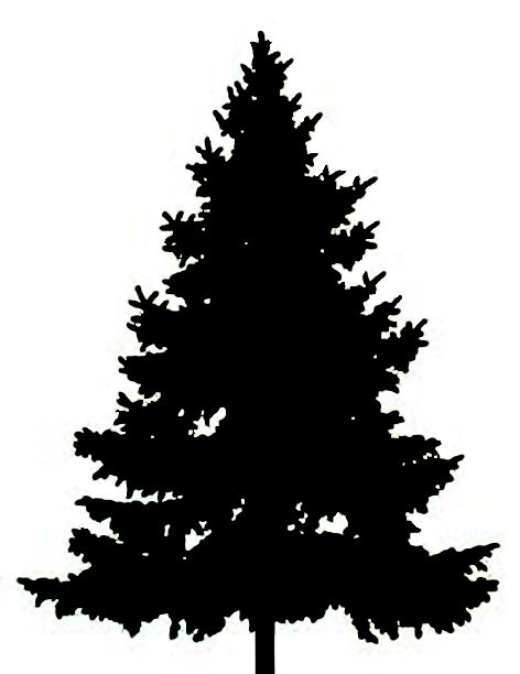 Pine clipart fir tree. Best clipartion com forest