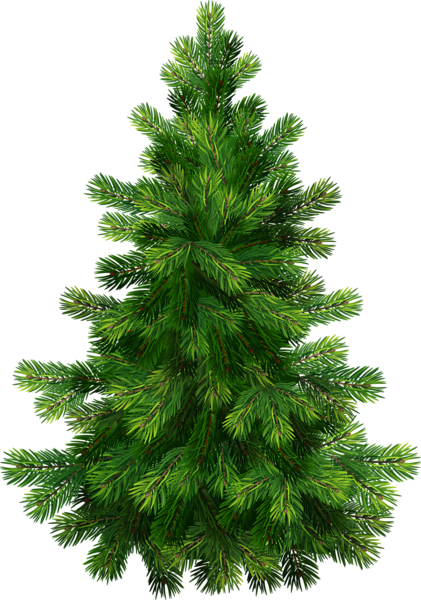 Pine trees png. Tree clipart pinterest