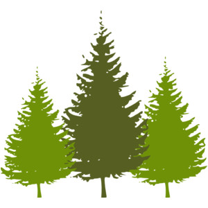 Pine clipart three. Fir tree pencil and