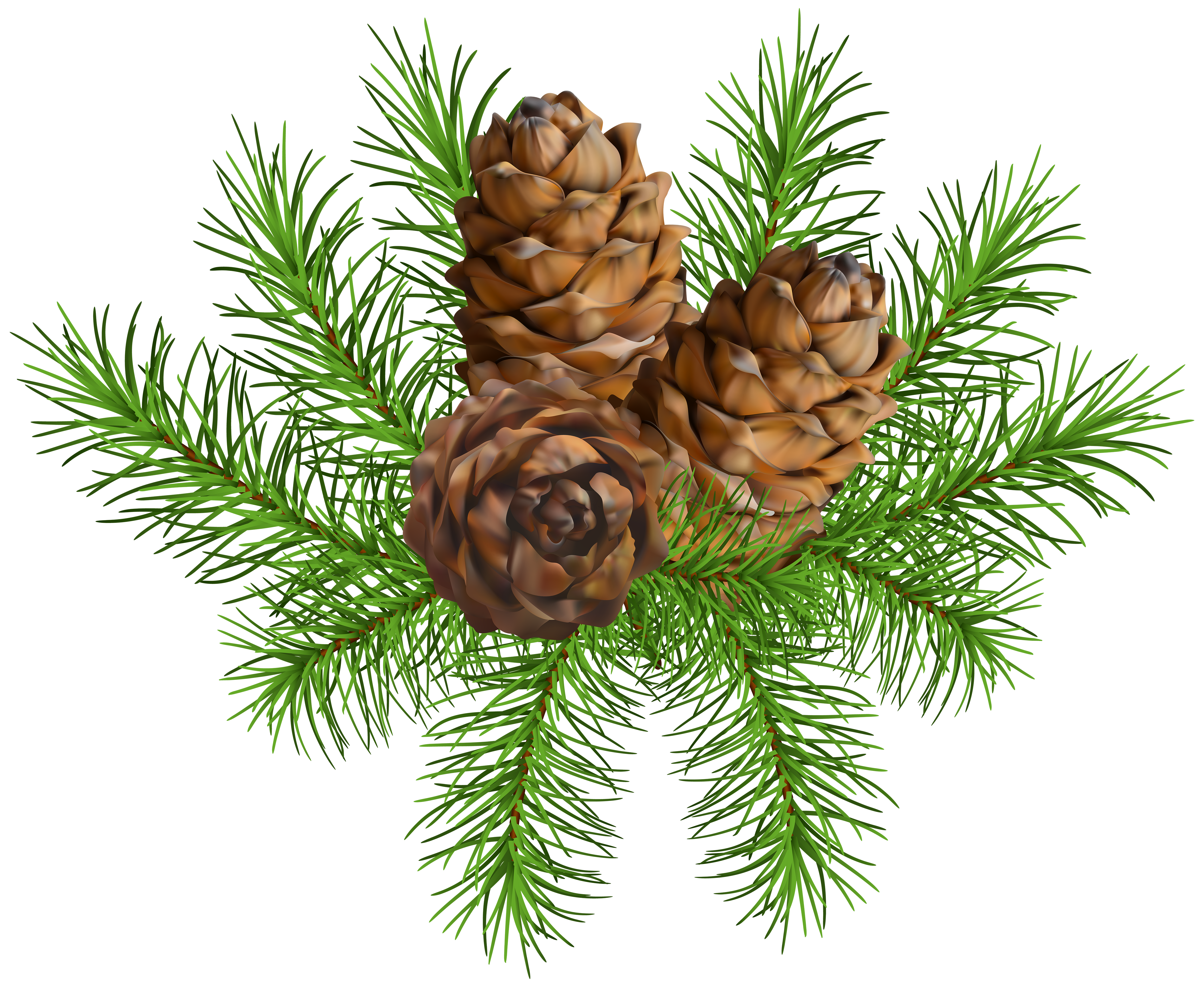 Pine cone branch png. With cones clip art