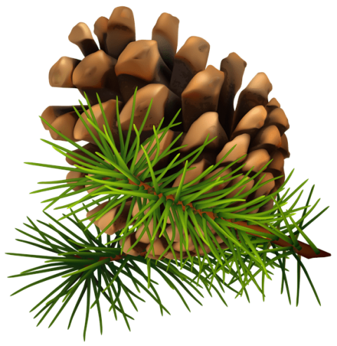 Christmas decorated pine cones png. Cone free images toppng