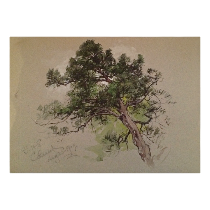 Pine drawing pitch. George henry smillie hudson