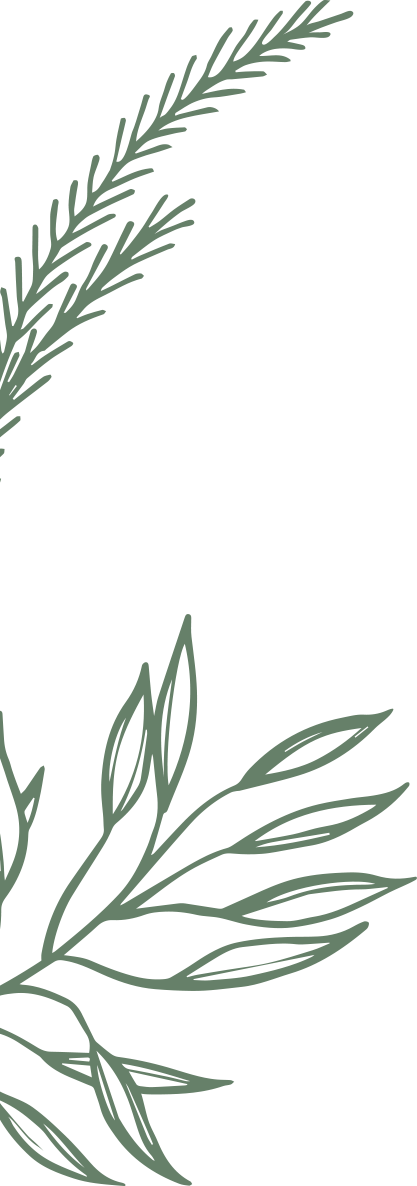 Pine drawing shore. Story and storyleavesleftpng