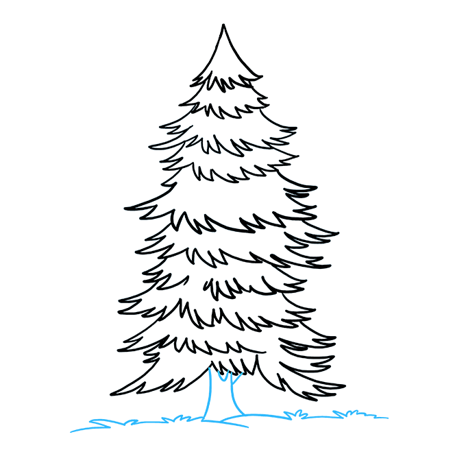Pine drawing spruce tree. How to draw a