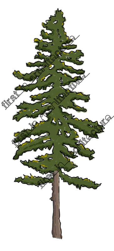 Pine drawing sketch. Up components sketchy trees
