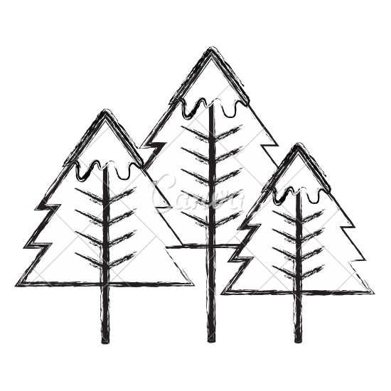 Pine drawing stick. Tree line at getdrawings