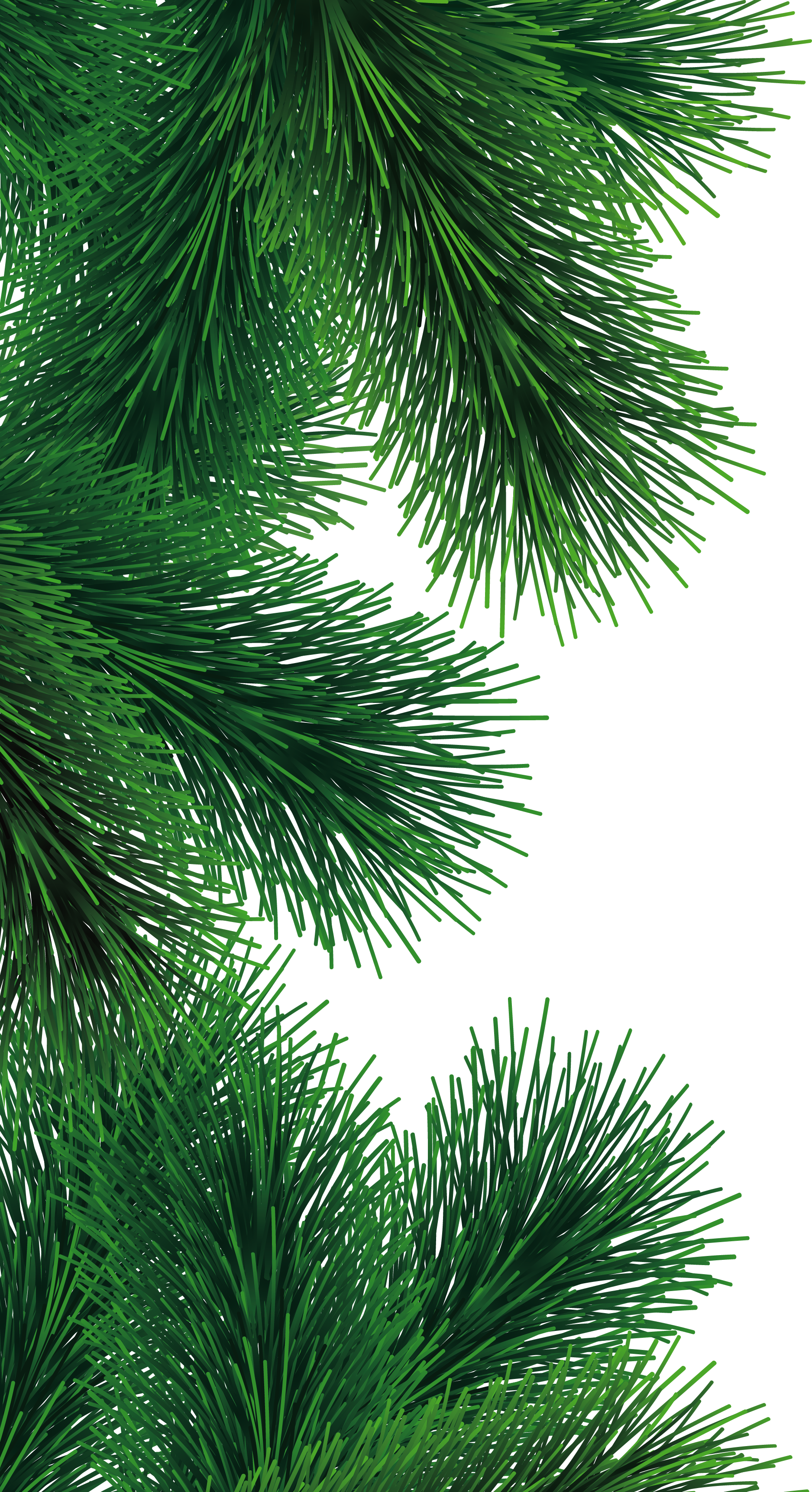 christmas tree branch png