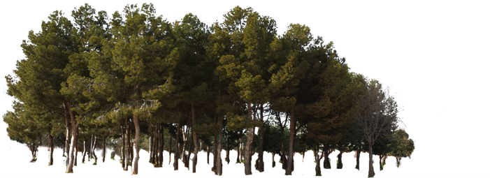 Download tree jungle woods. Forest pine trees png picture library