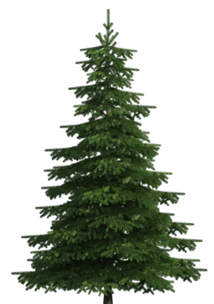 Realistic tree clip art. Pine forest png clip art transparent download
