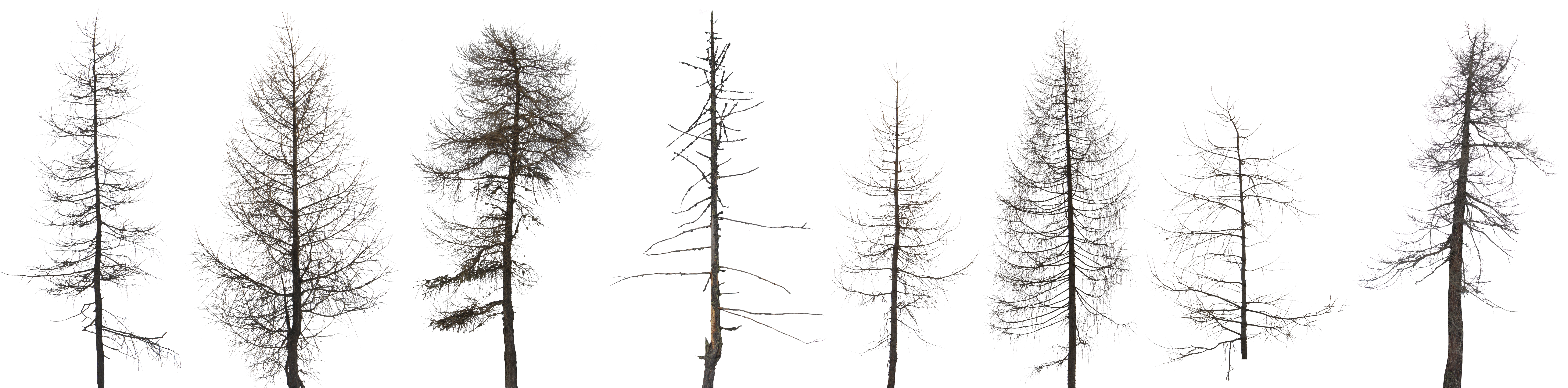 High res tree textures. Pine forest png graphic free download