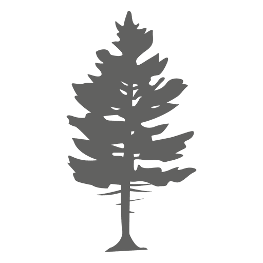 Pine leaf vector png. Tree silhouette transparent svg