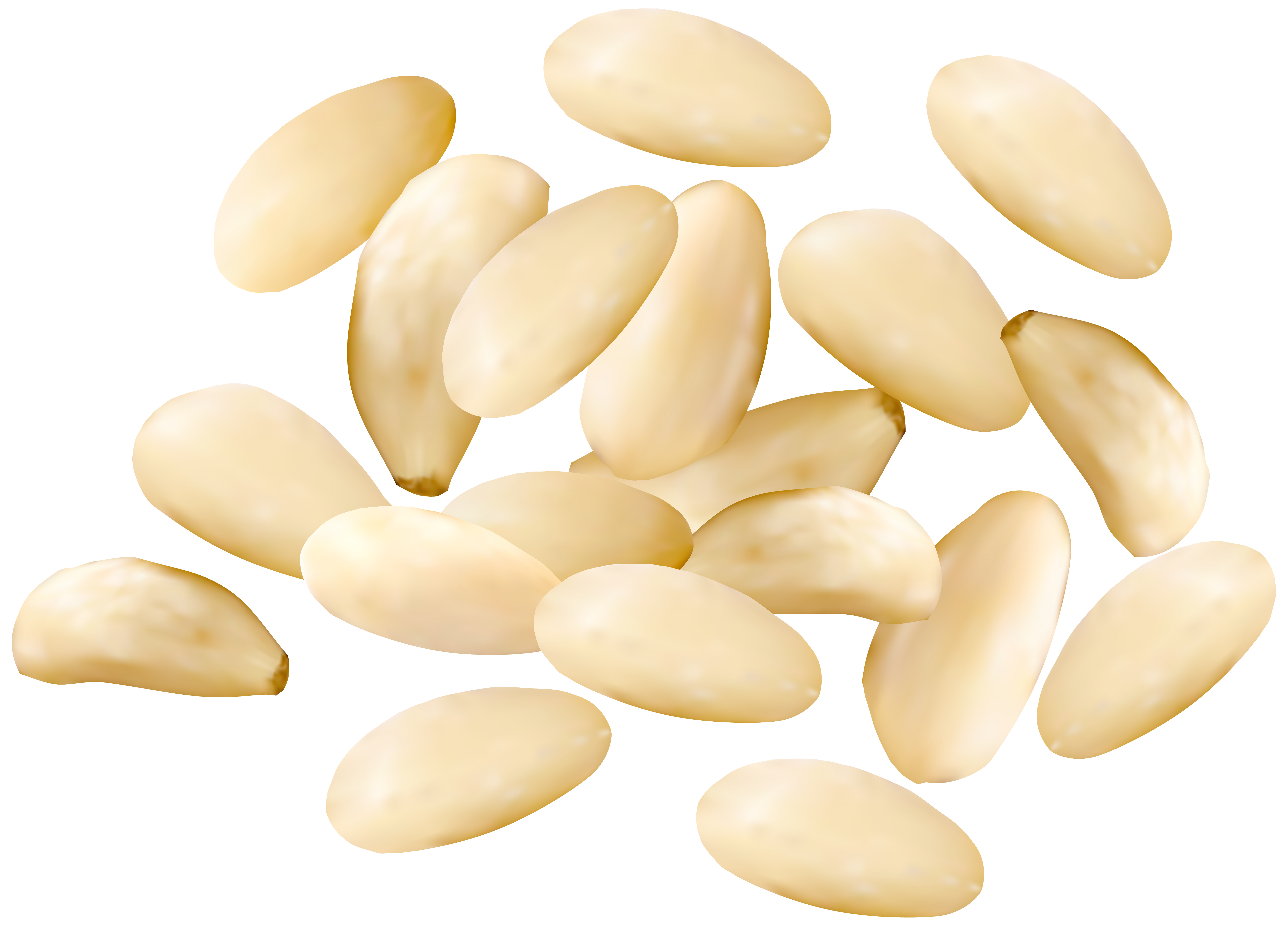 Pine nuts png. Clipart image gallery yopriceville