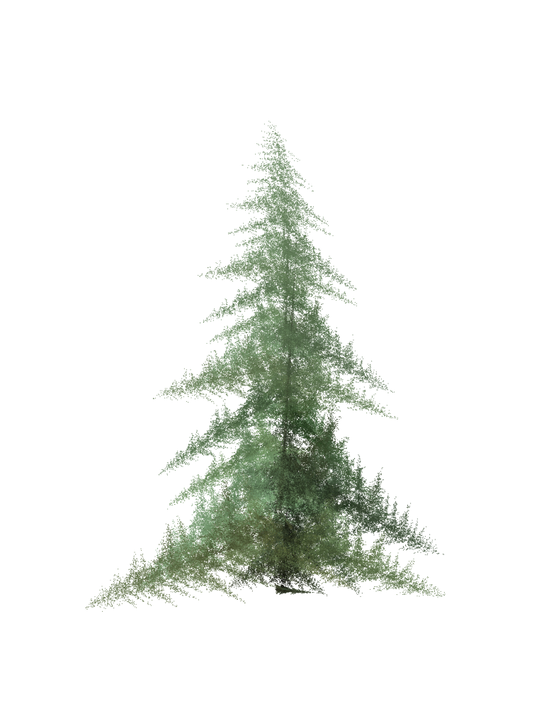 Pine png. File ifs wikimedia commons
