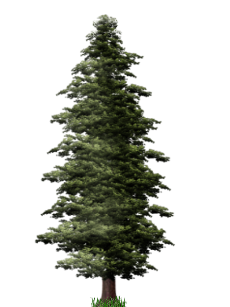 Pine png. Tree file peoplepng com