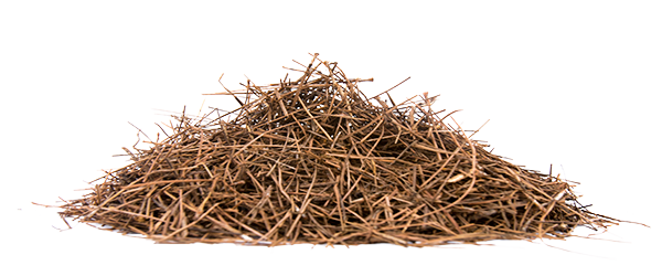 Pine straw png. Pinestraw landscape management services