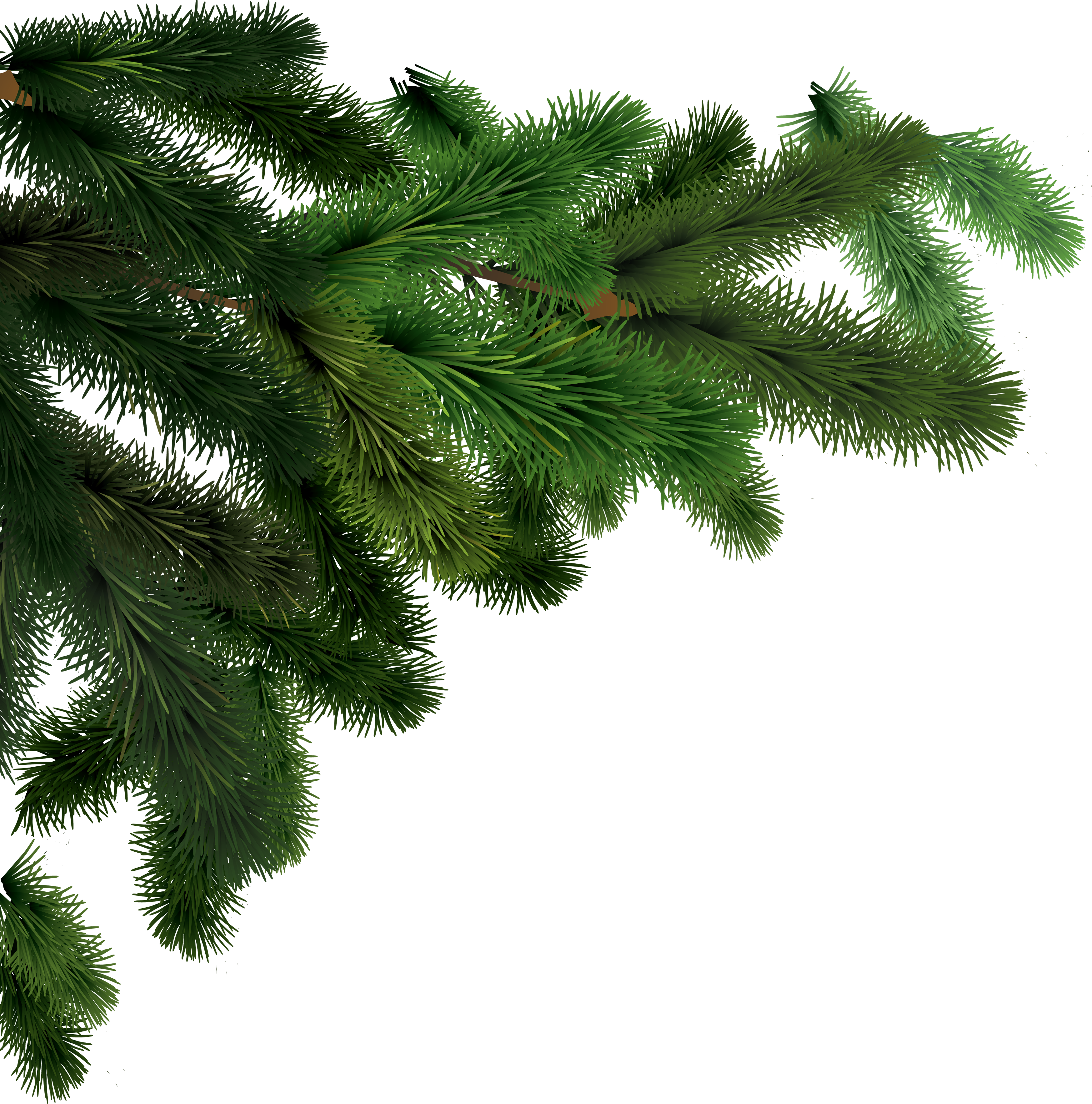 spruce branch png