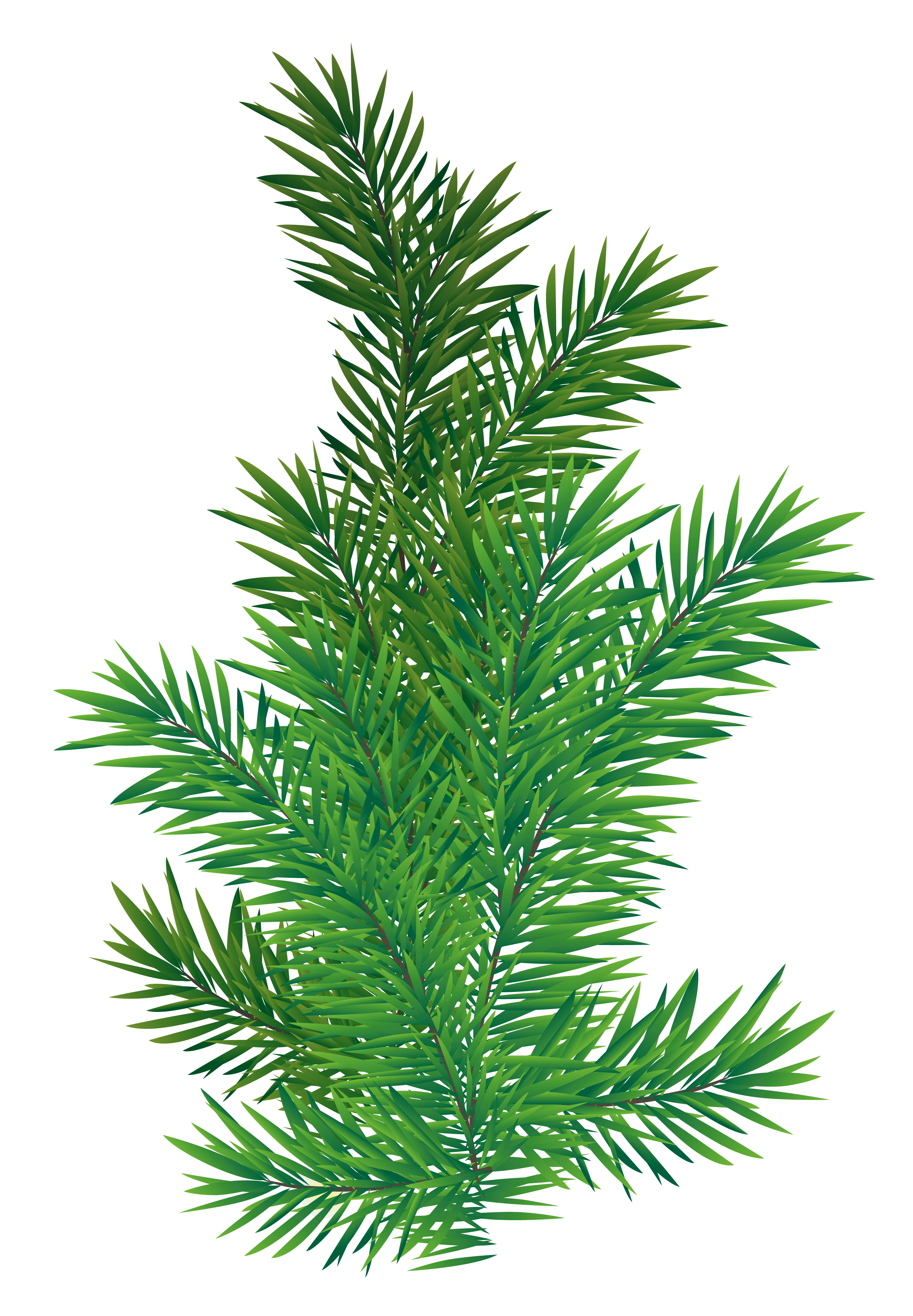 Pine tree branch png. Picture gallery yopriceville high