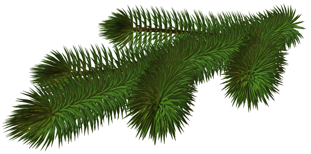 Pine branches png. Transparent branch d picture