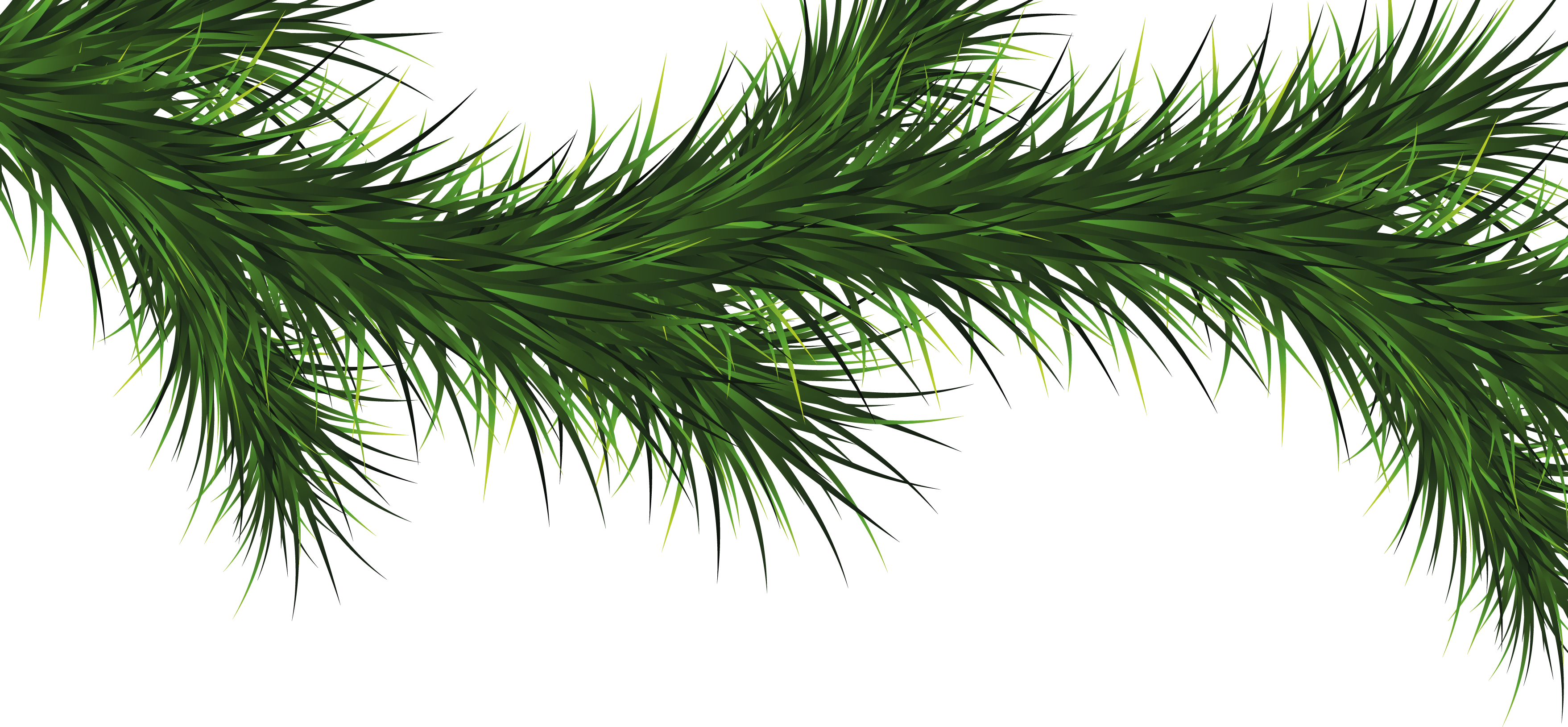 Pine tree branch png. Fir images free download
