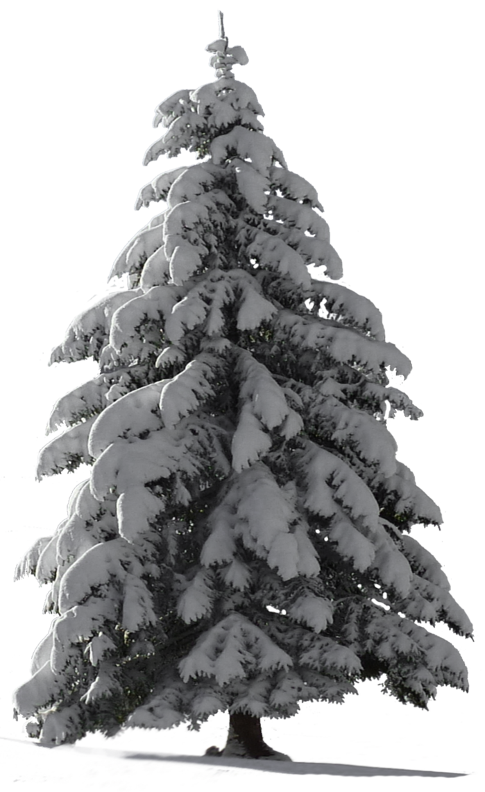 Snow covered trees png. Christmas tree for my