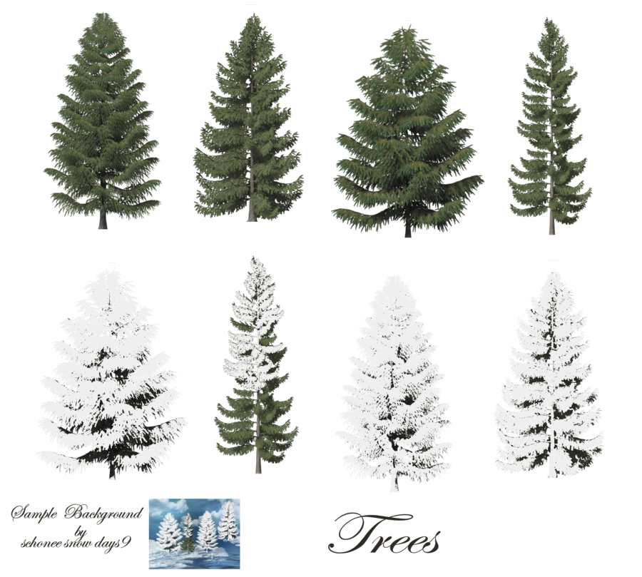 Pine png. Trees stock by mysticmorning