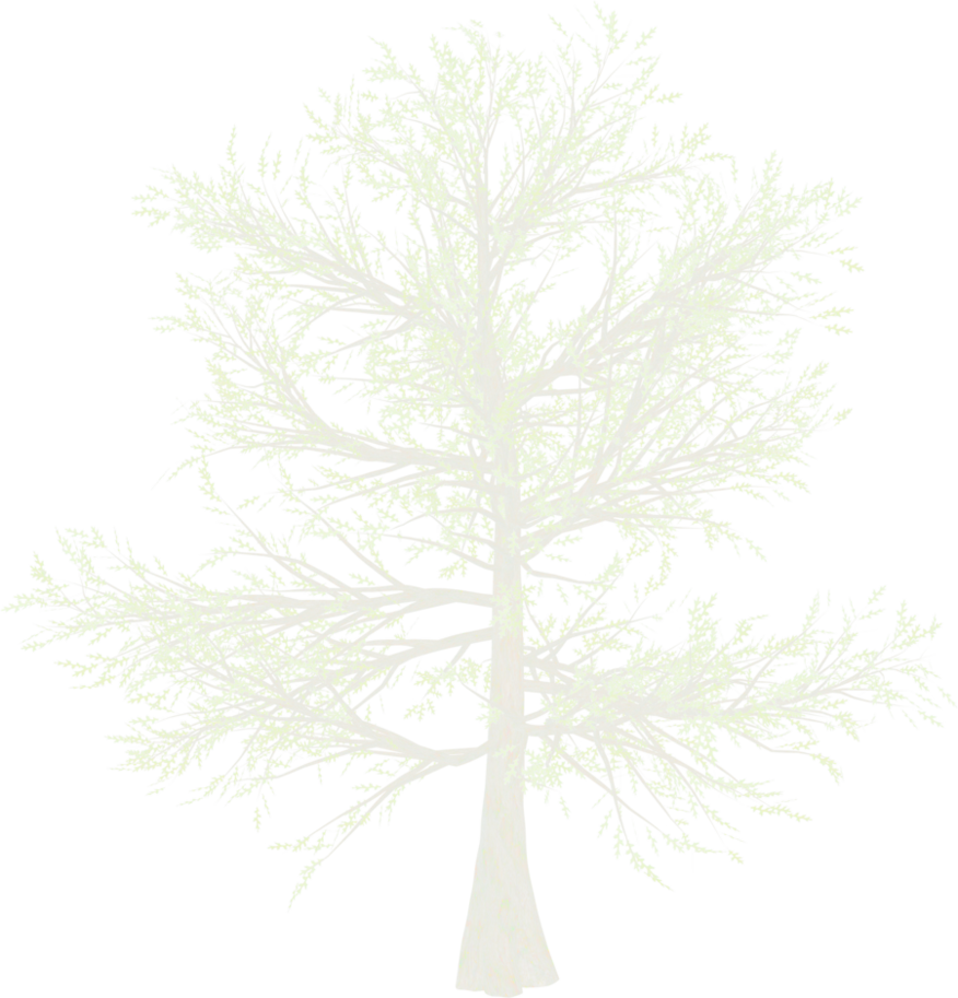 White tree png. Snow pine by mysticmorning