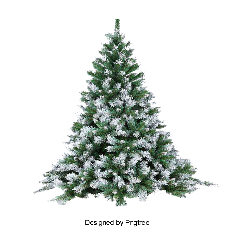 Christmas pine tree png. Trees snowy winter snow