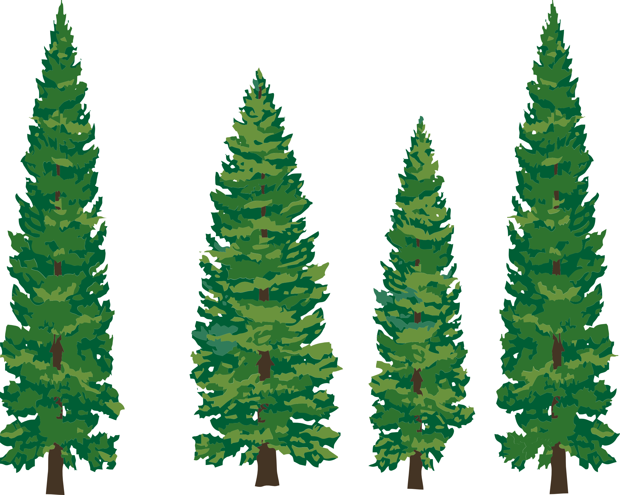 Pinetree vector eastern white pine. Tree clipart png panda