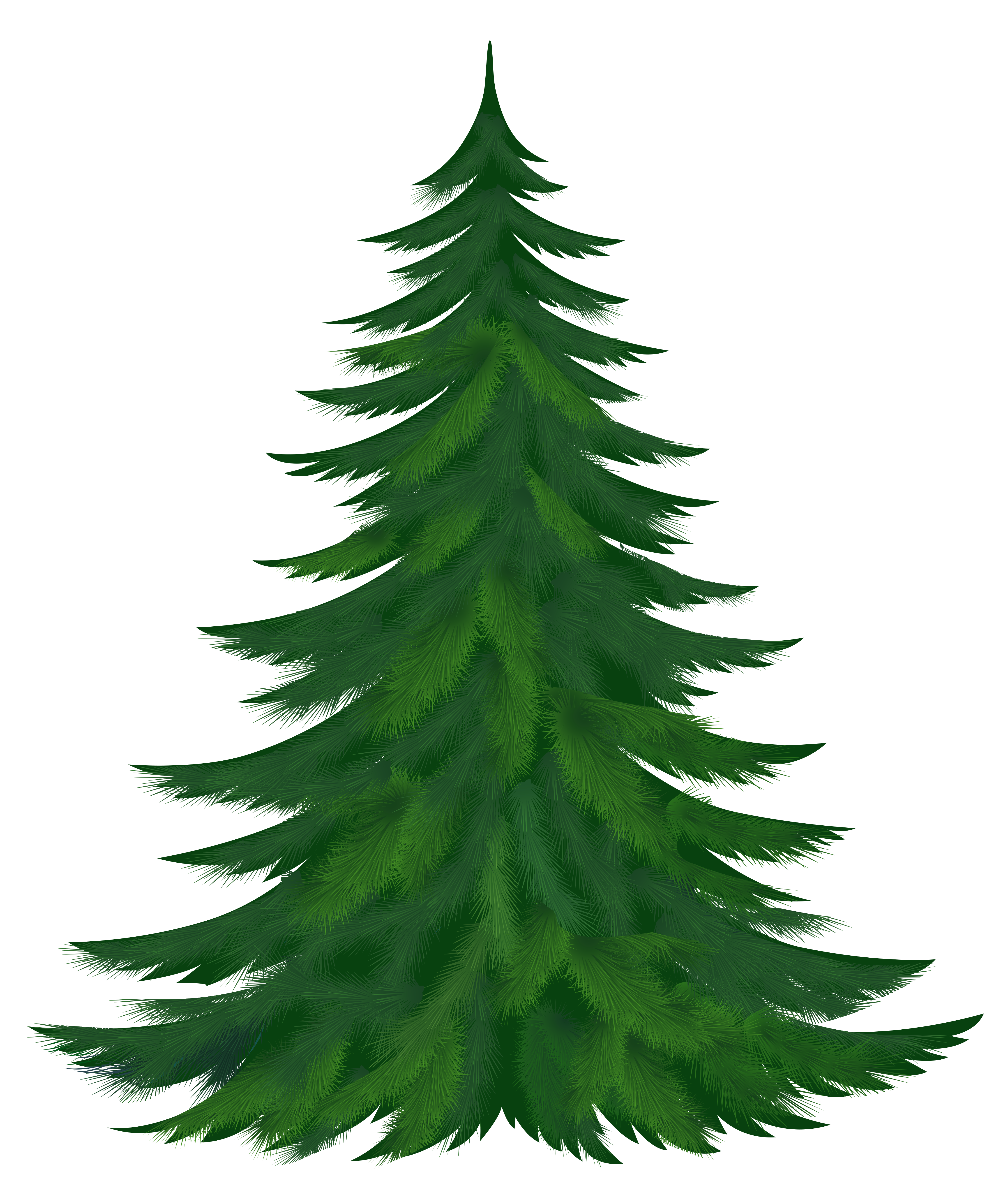 Transparent tree picture gallery. Pine trees clipart png png royalty free library