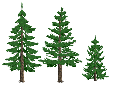 Pine tree graphic png. Download free transparent image