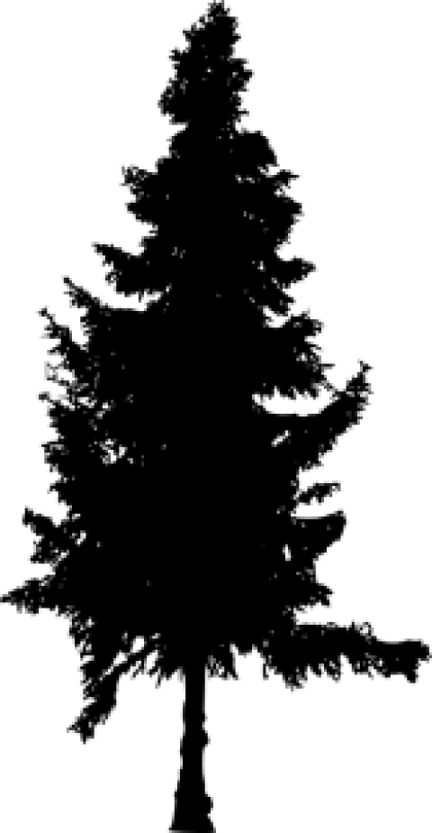 Pine tree free png. Silhouette images toppng transparent