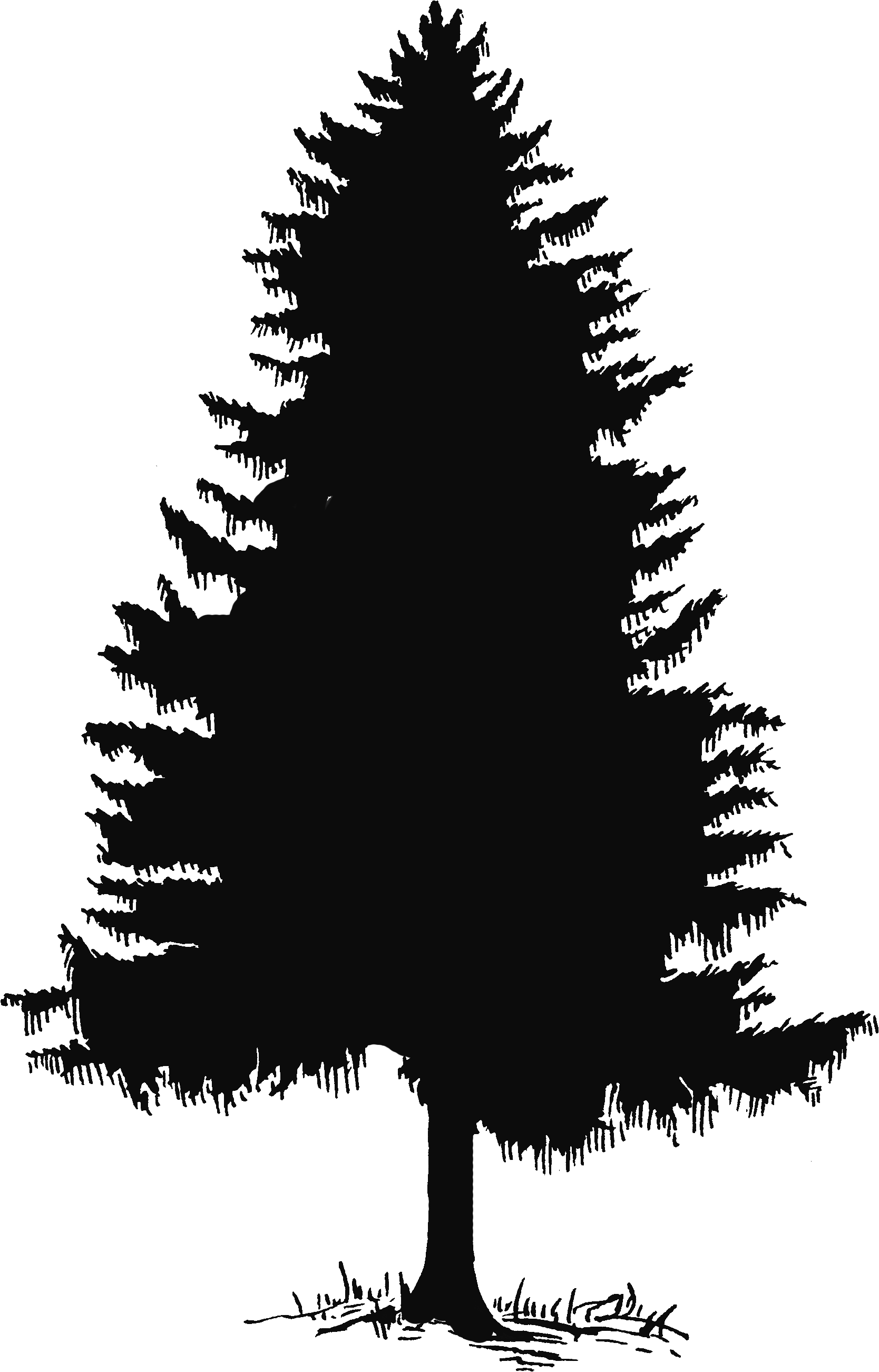 Pine tree outline png. Silhouette and clip art