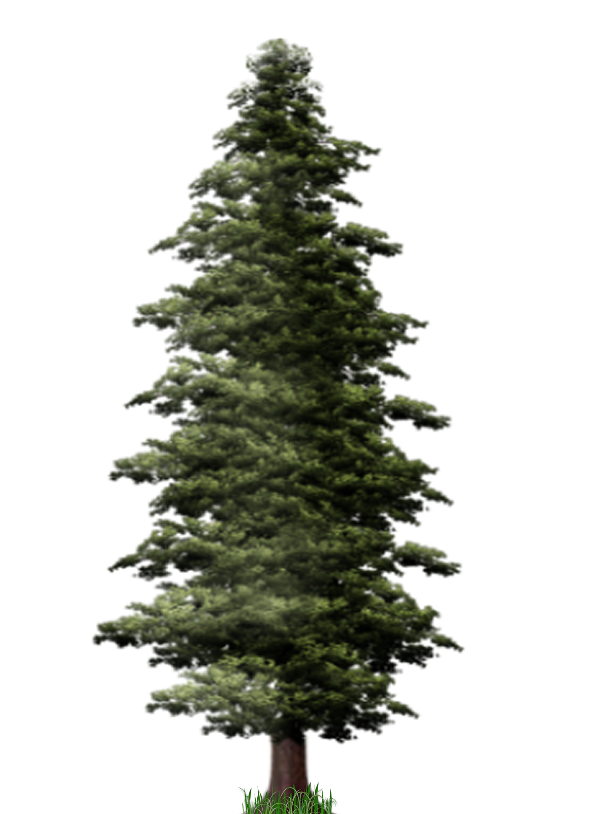 File mart. Pine tree png picture black and white stock