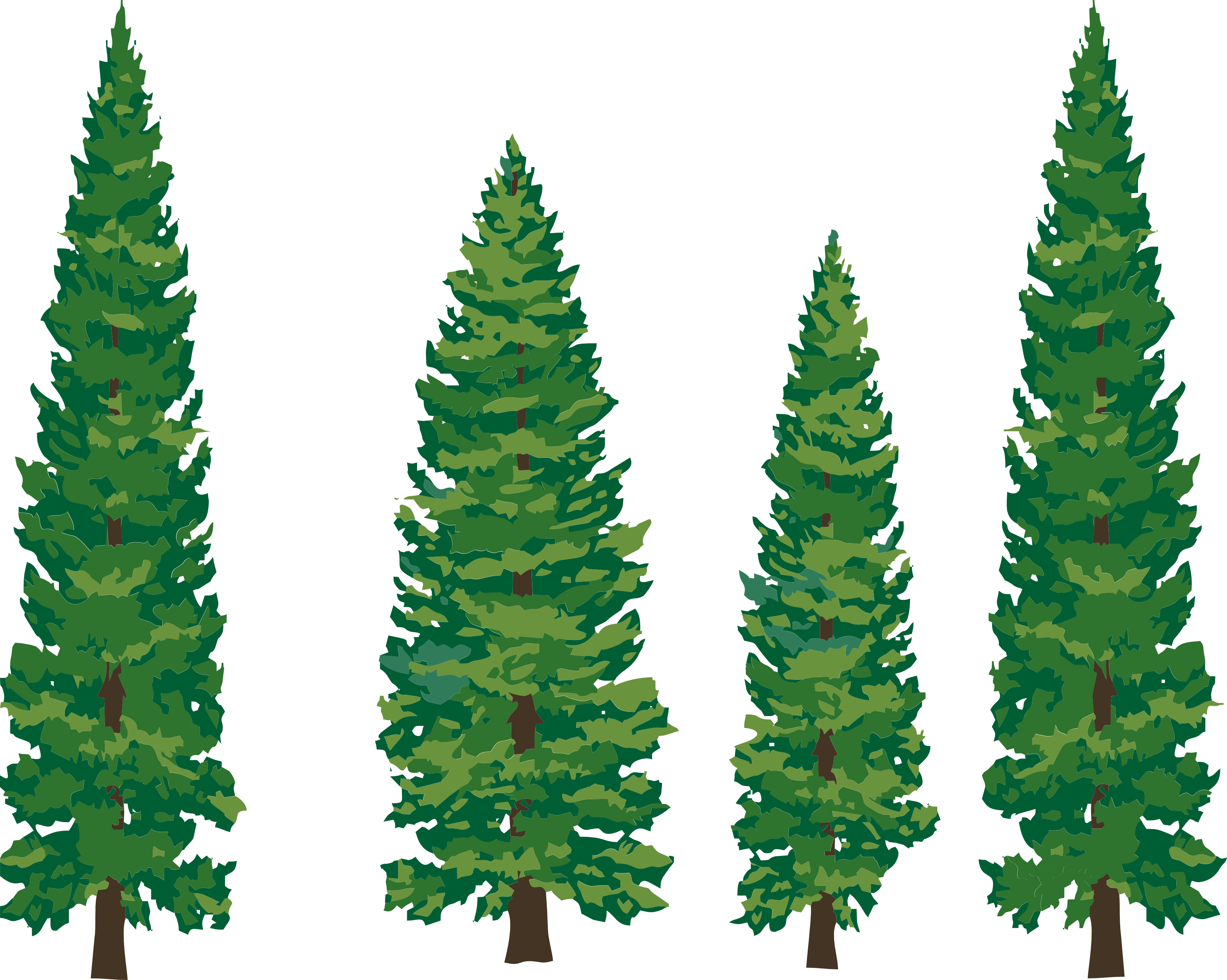 Pine drawing longleaf. Tree clipart png panda