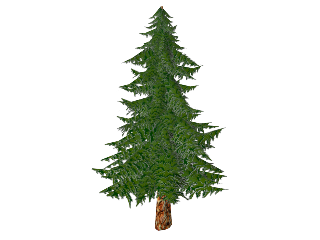 Pine tree texture png. D model toon
