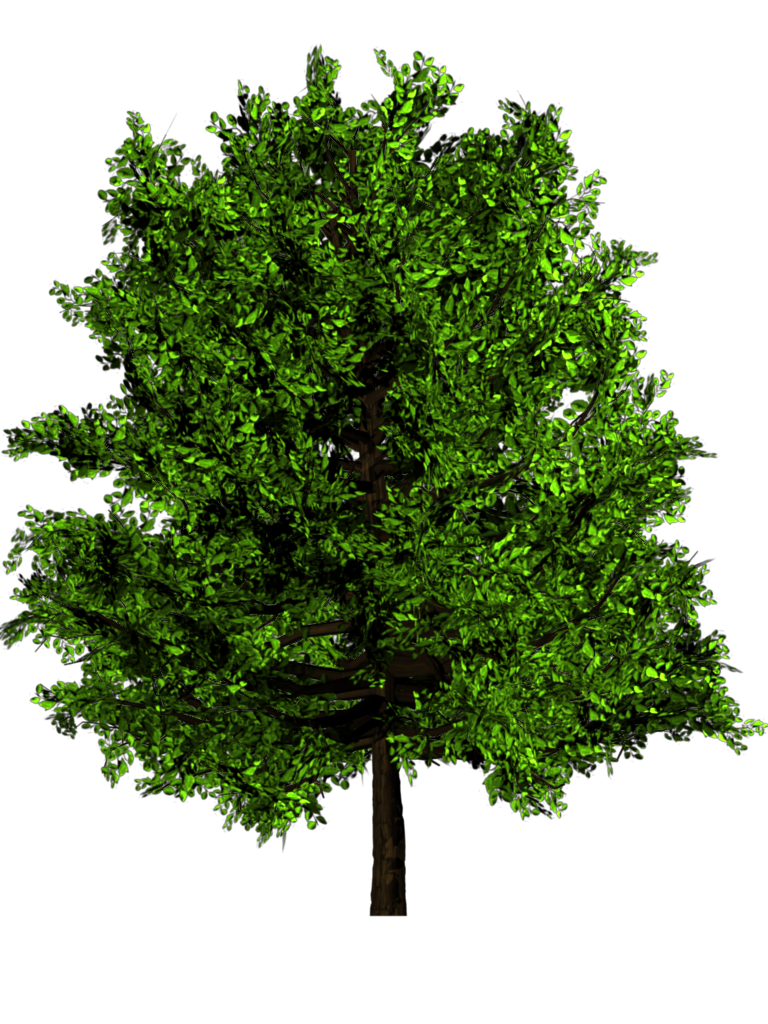 Pine tree texture png. Greenhouse blender for architecture